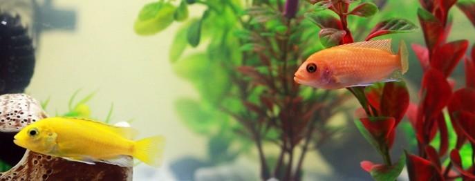 Woran erkennt man kranke Aquarienfische?