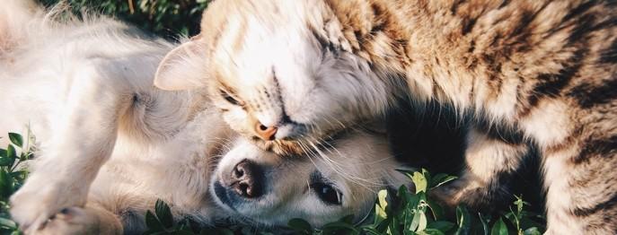 Diabetes bei Hund und Katze