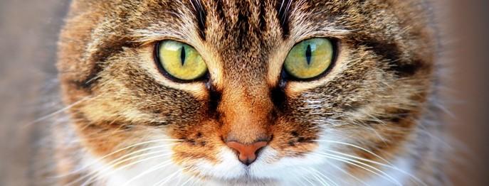 Feline Notfälle